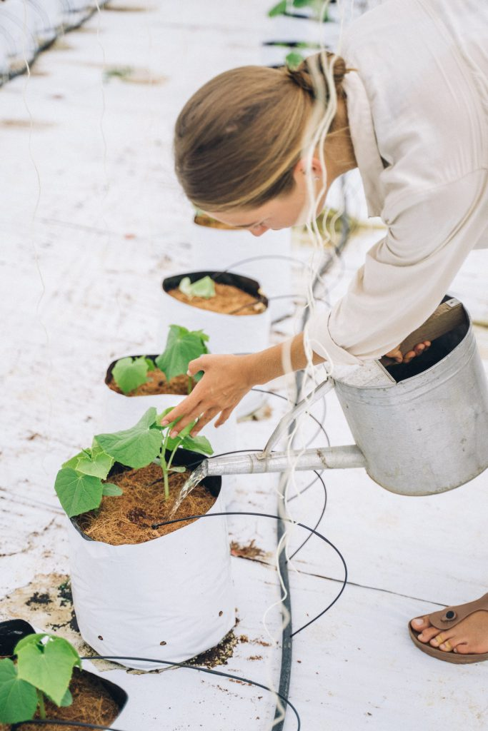 nutrients for hydroponics